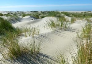 Die niederländische Küste