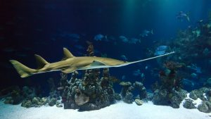 Zee Aquarium Bergen aan Zee