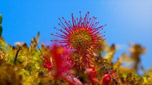 Botanische Tuin Alkmaar : Hortus alkmaar urlaub julianadorp aan zee