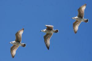 Vogelspötter Julianadorp aan Zee