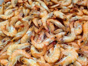 Selbst Krabben fangen in Julianadorp aan Zee